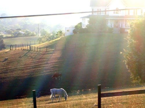 Free stock photo of animal, horse, sunlight