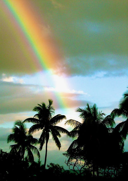 Free stock photo of hawaii, palm trees, rainbow