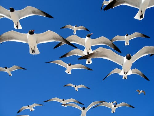 Free stock photo of blue, seagulls, sky