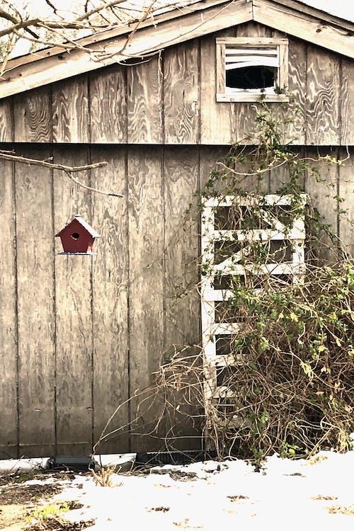 Základová fotografie zdarma na téma ptačí budka, stodola