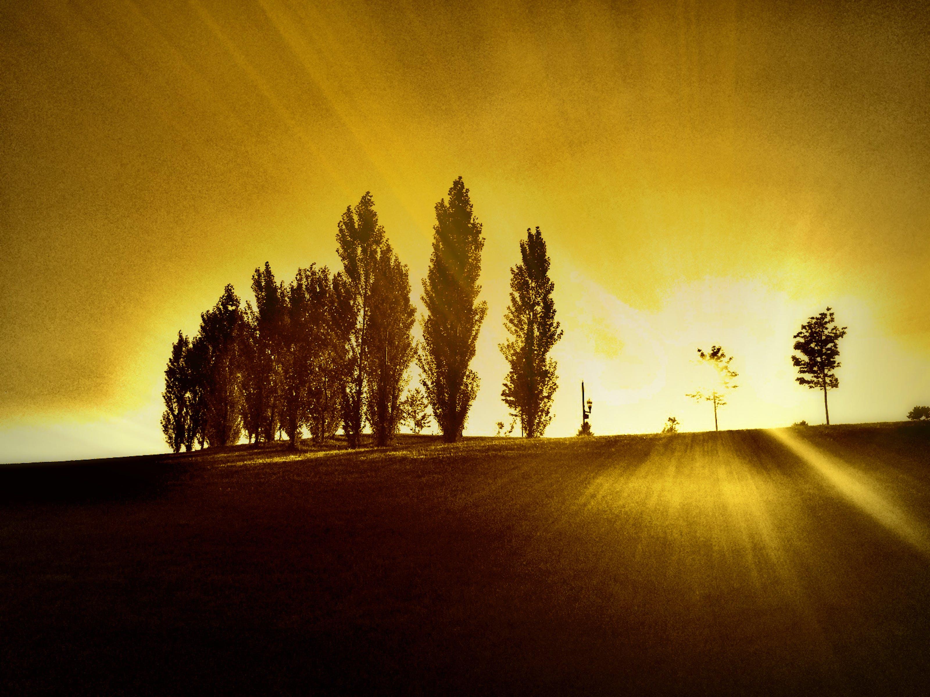 Free stock photo of park, sunset, sunset park