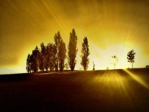 Základová fotografie zdarma na téma park, západ slunce, západ slunce parku