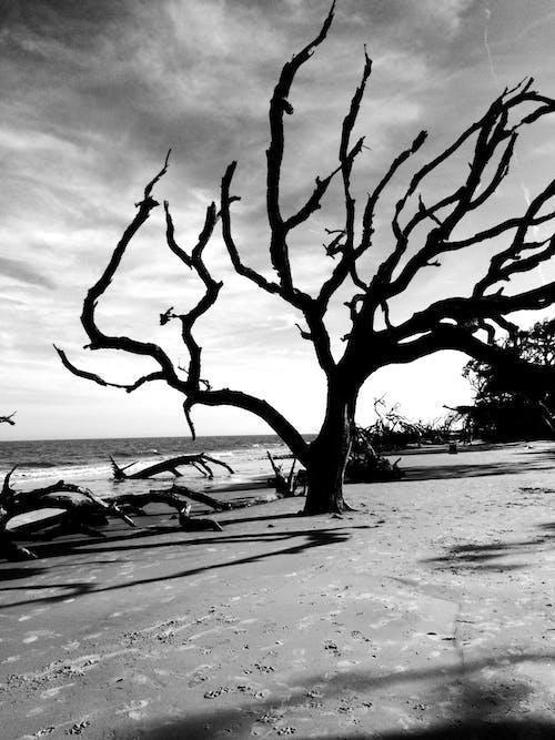 Základová fotografie zdarma na téma černobílá, stromy