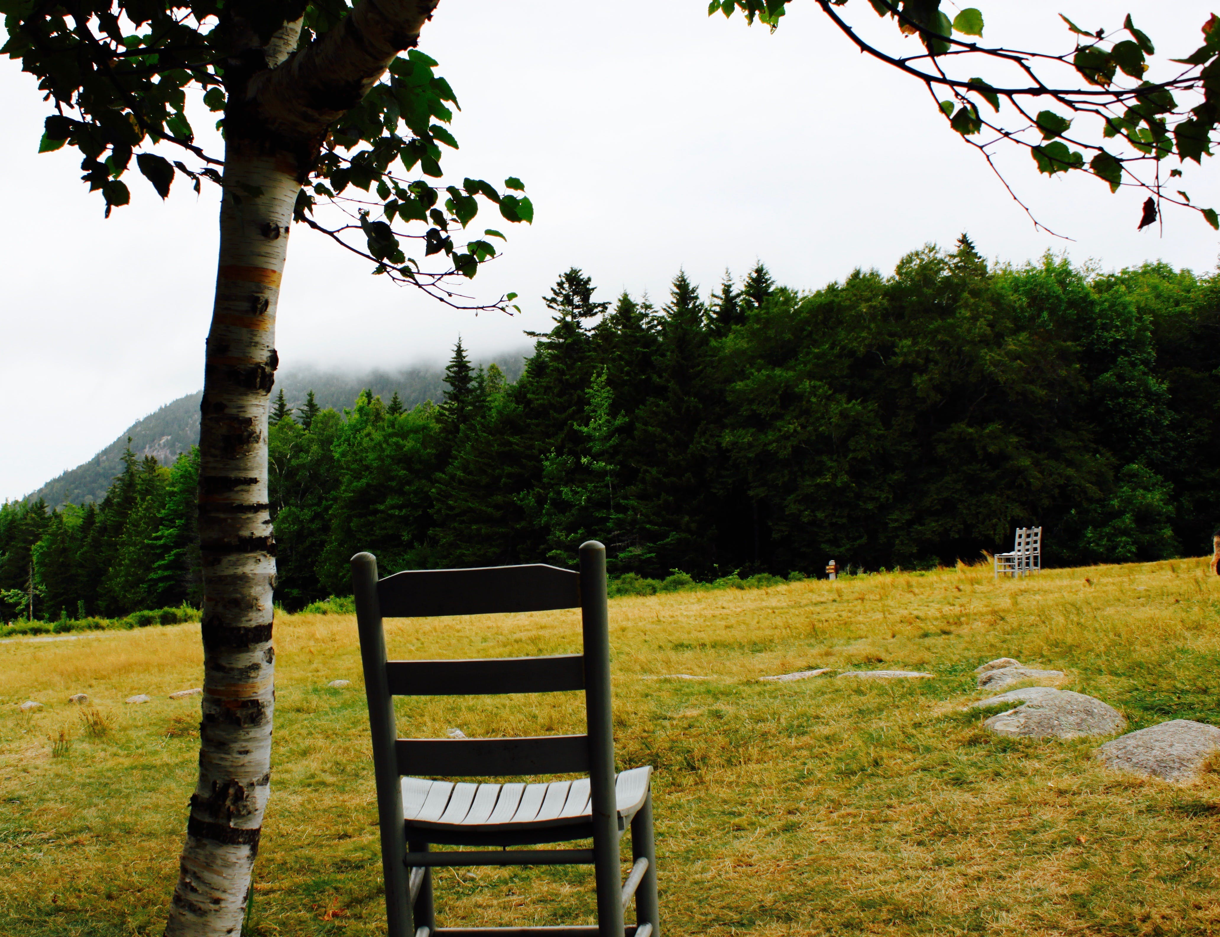 Free stock photo of maine chair nature
