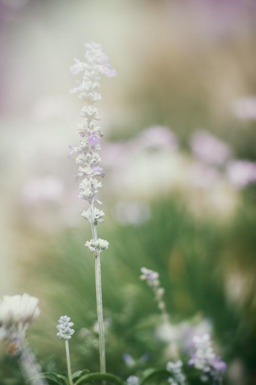 Ingyenes stockfotó makró, növényvilág, virágok, virágzás témában