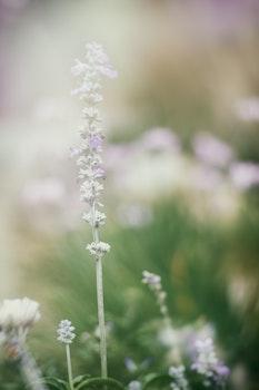 White Petaled Flower Bloom at Daytime