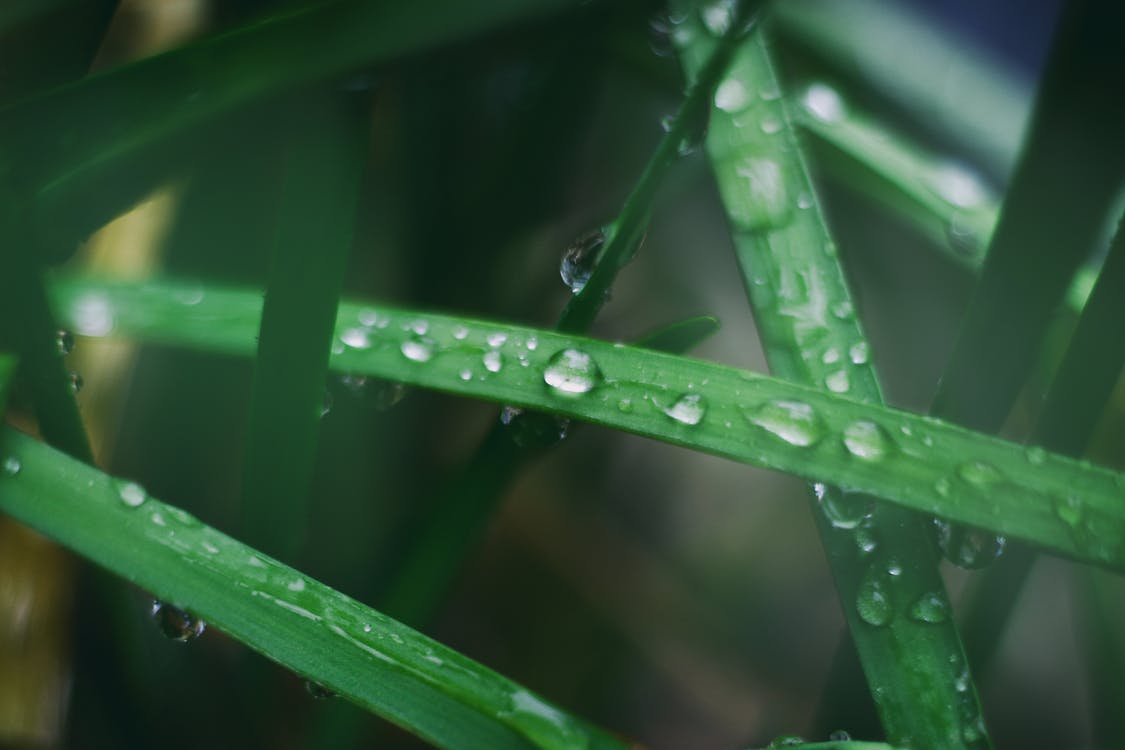 капли воды, капли дождя, максросъемка