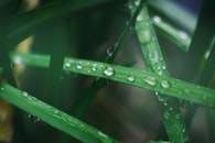 grass, dew, raindrops