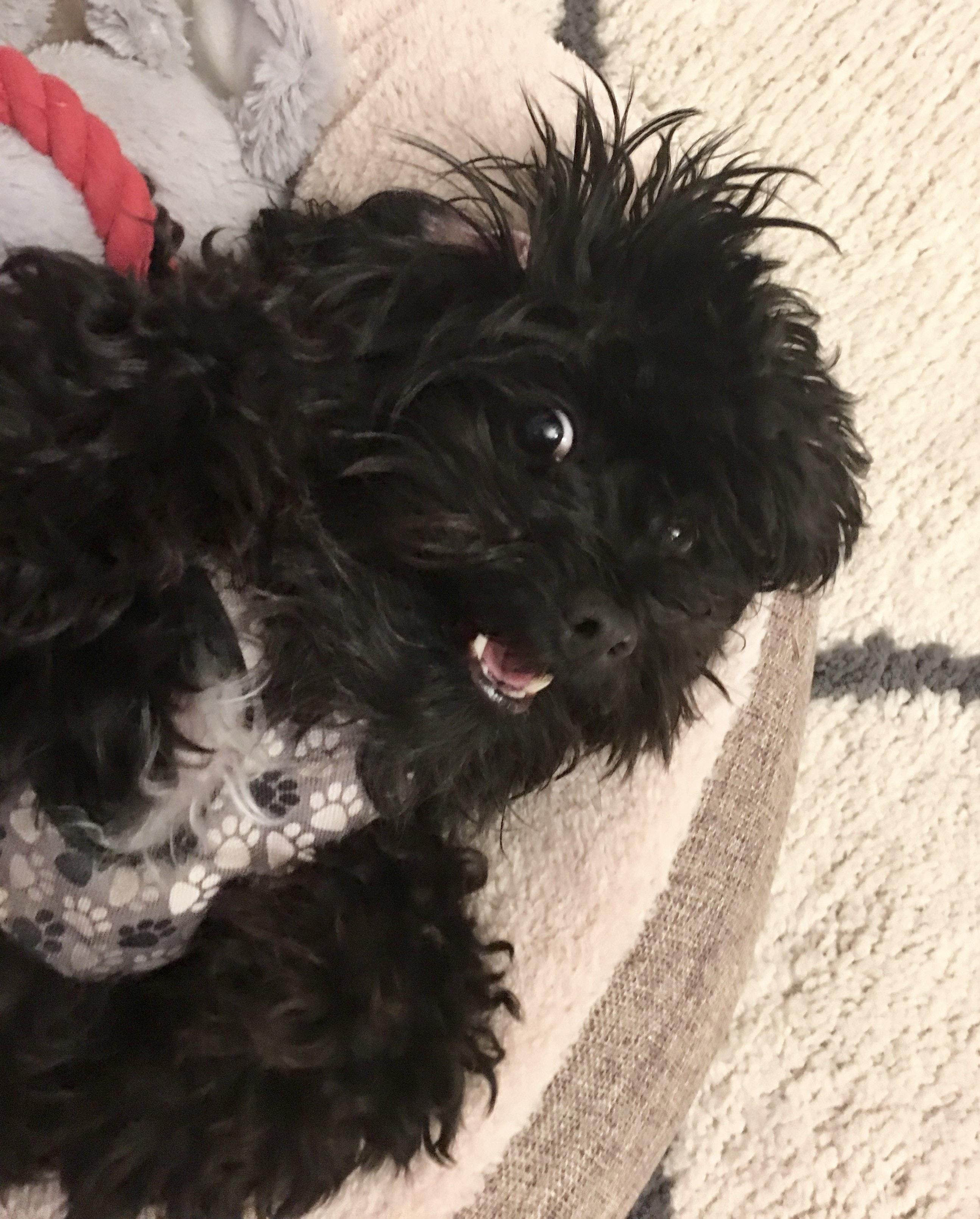 Free stock photo of black dog, Happy dog, laughing dog