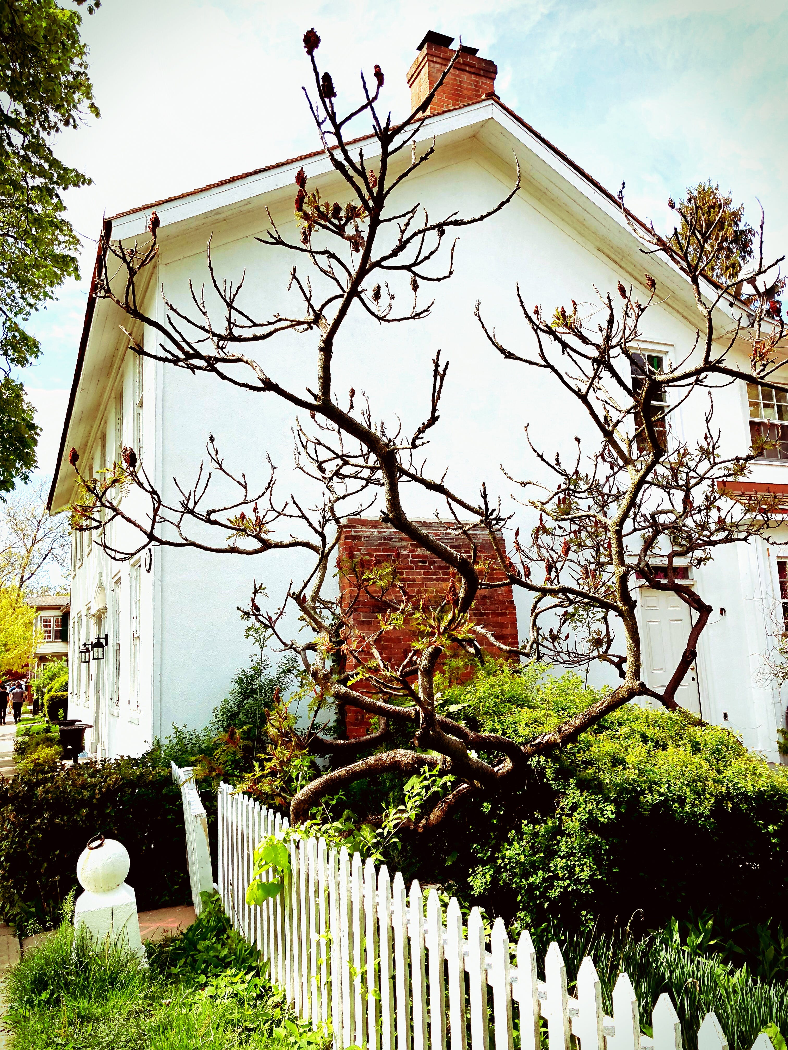 Free stock photo of branches, house, old house, shadow