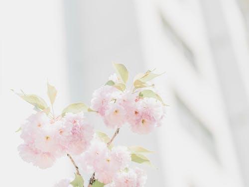Ingyenes stockfotó gyár, növényvilág, szirmok, virágok témában