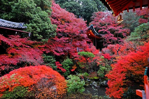 Free stock photo of japan, kyoto, temple