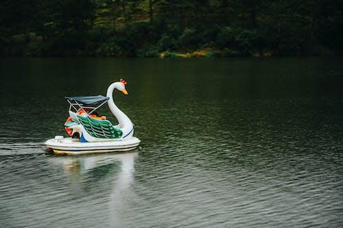 Photos gratuites de bateau, concevoir, cygne, eau