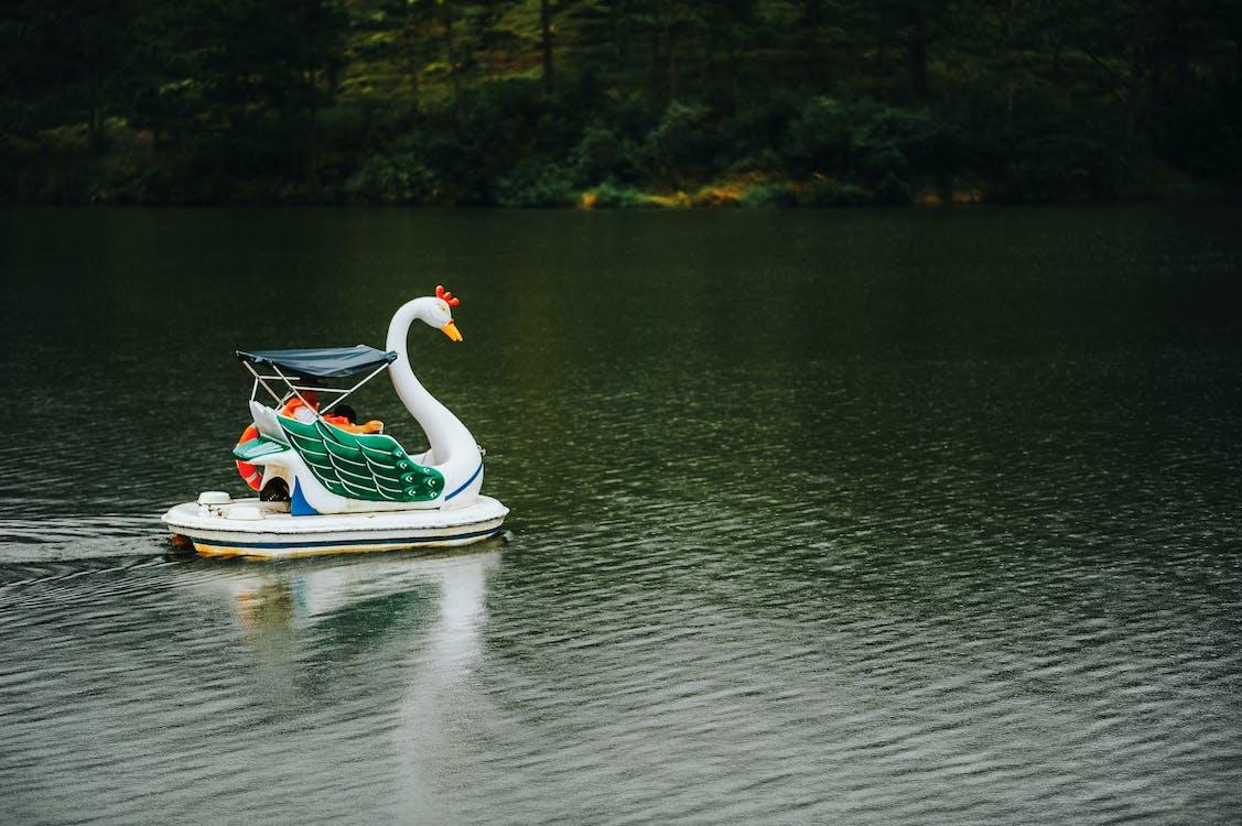 agua, barca, cisne