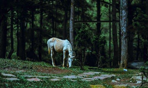 Kostnadsfri bild av däggdjur, djur, träd, vilda djur och växter