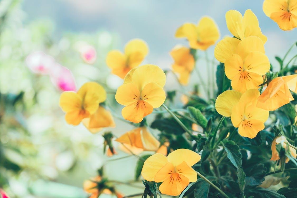 anläggning, blomma, blommor