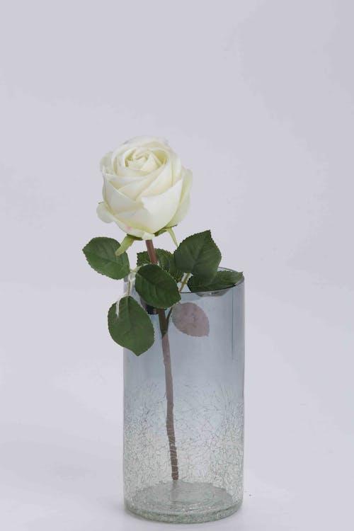 Безкоштовне стокове фото на тему «ваза, ваза з троянди, квіткова ваза, подарунок на день народження»