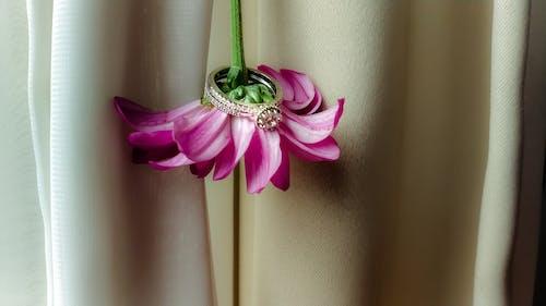 Fotos de stock gratuitas de #anillo, #boda, #mobileshot