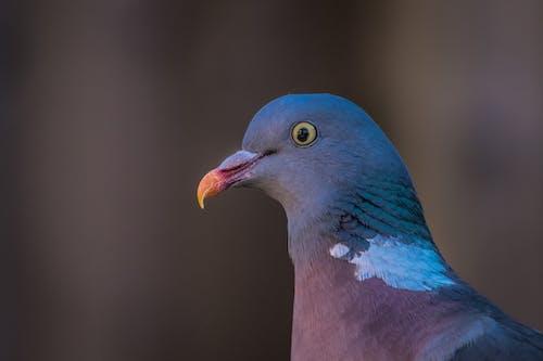 #wildlife, #鳥, #鴿子 的 免費圖庫相片