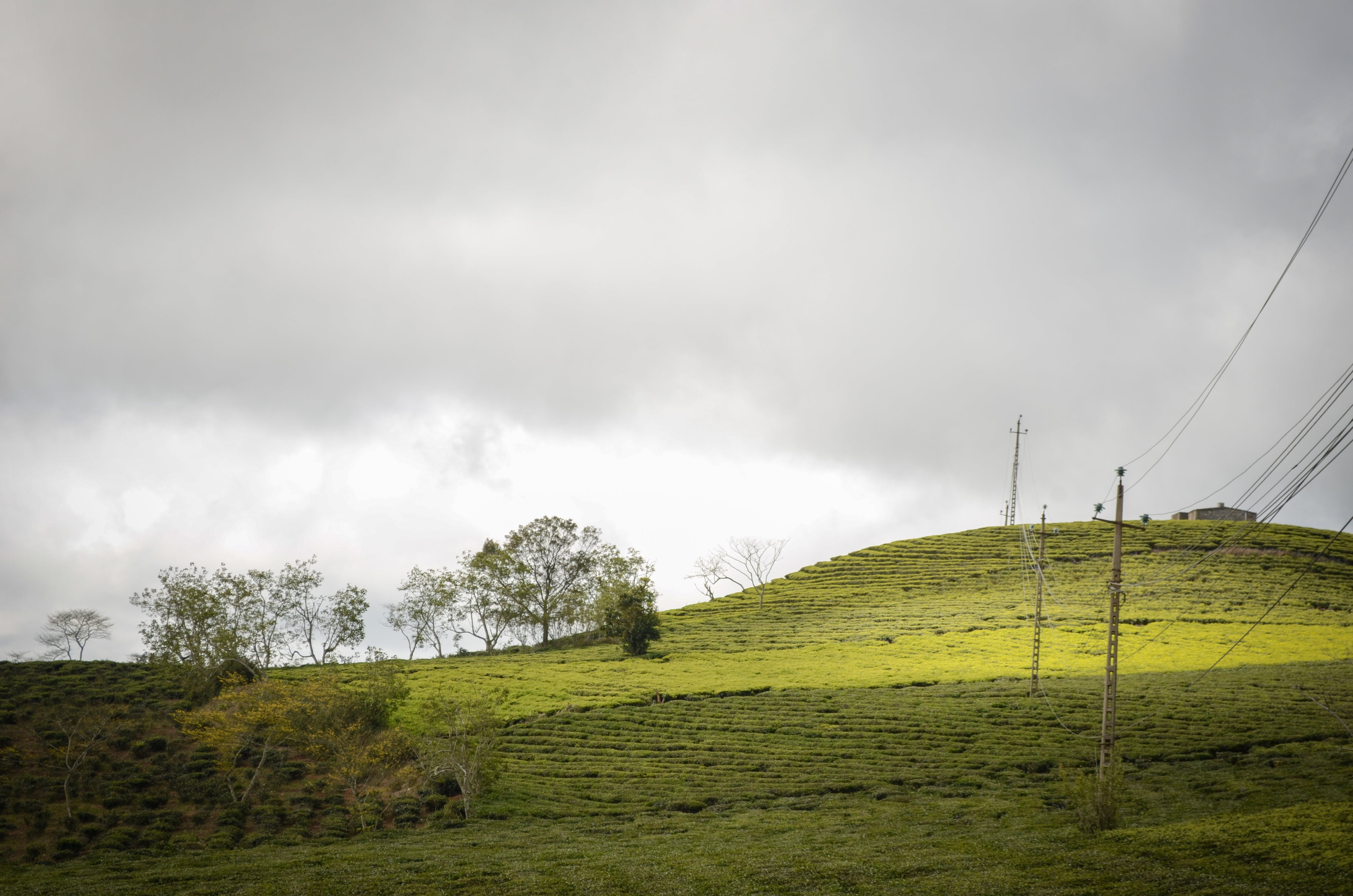Free stock photo of cloudy, hill, farm, tea