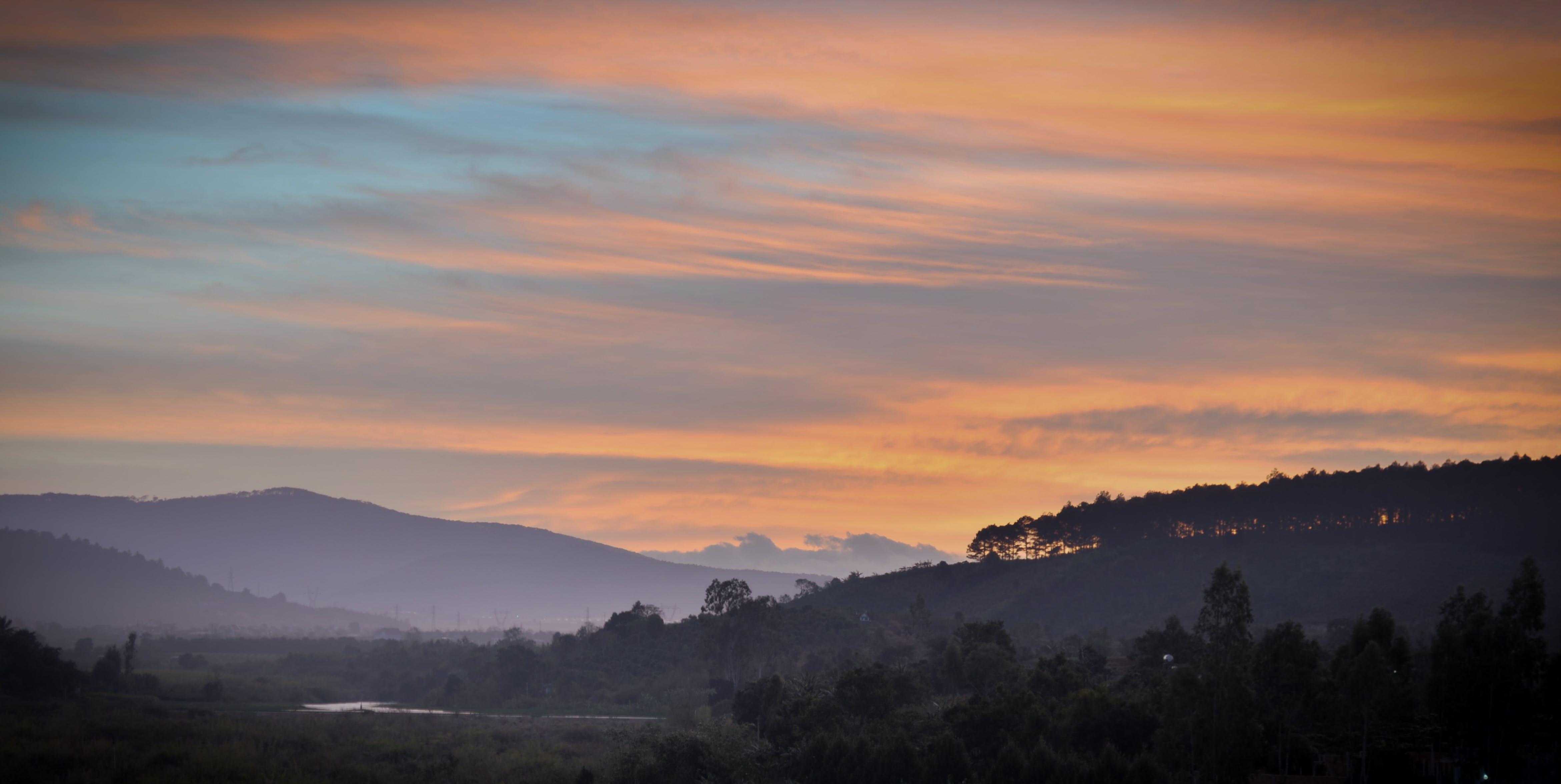 dawn, forest, hill