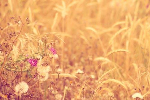 Foto profissional grátis de natureza, planta, planta em floração, plantas