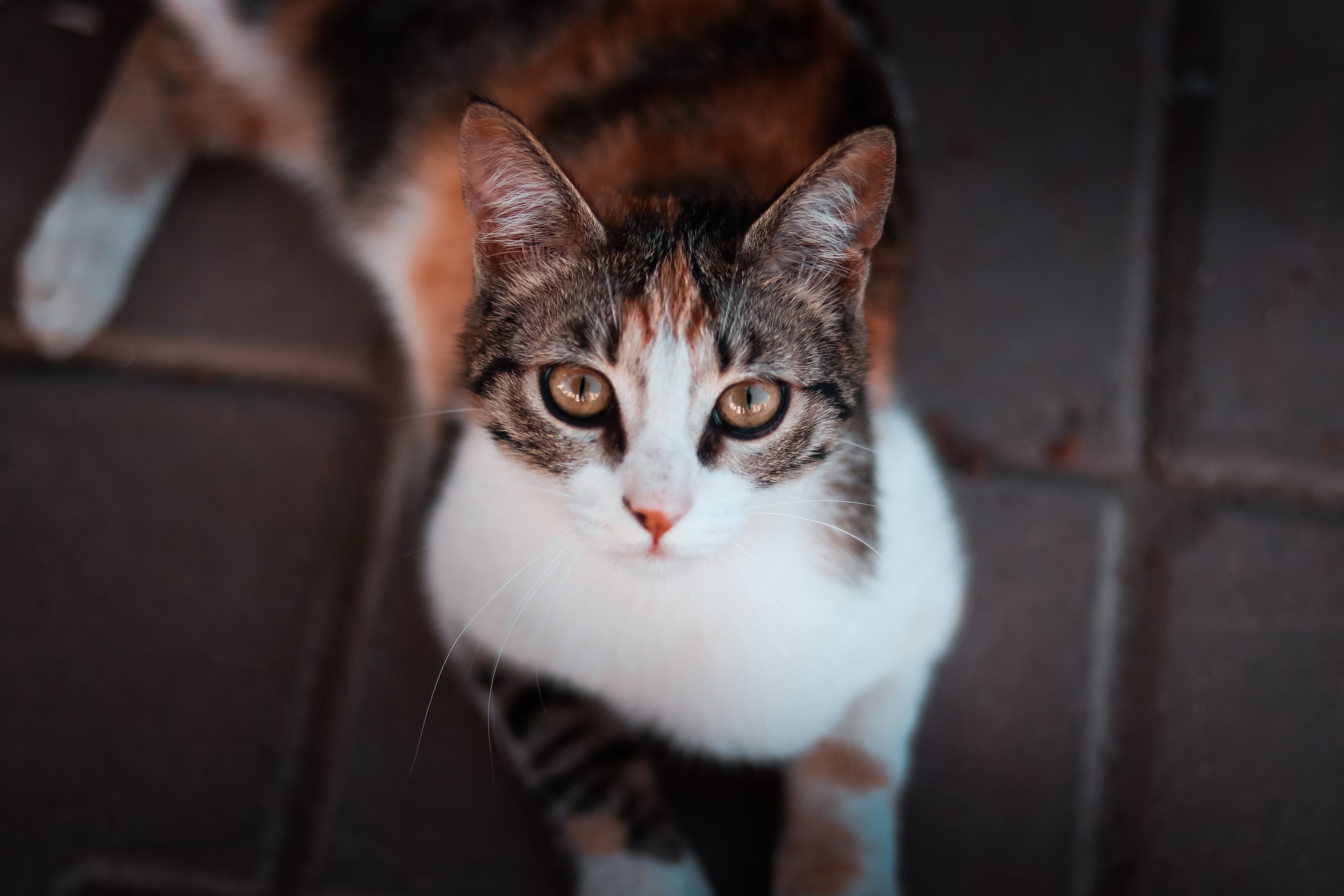 Selective Focus Photograph of Brown Tabby Cat