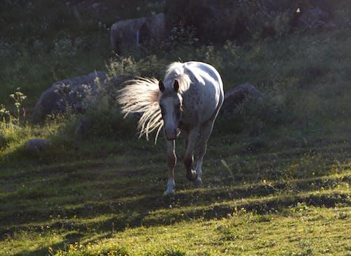 Gratis stockfoto met paard