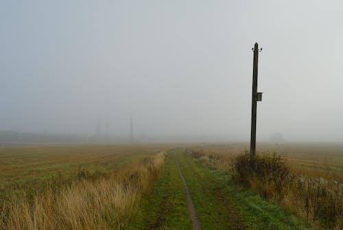 Kostenloses Stock Foto zu dunstig, feld, nebel, neblig