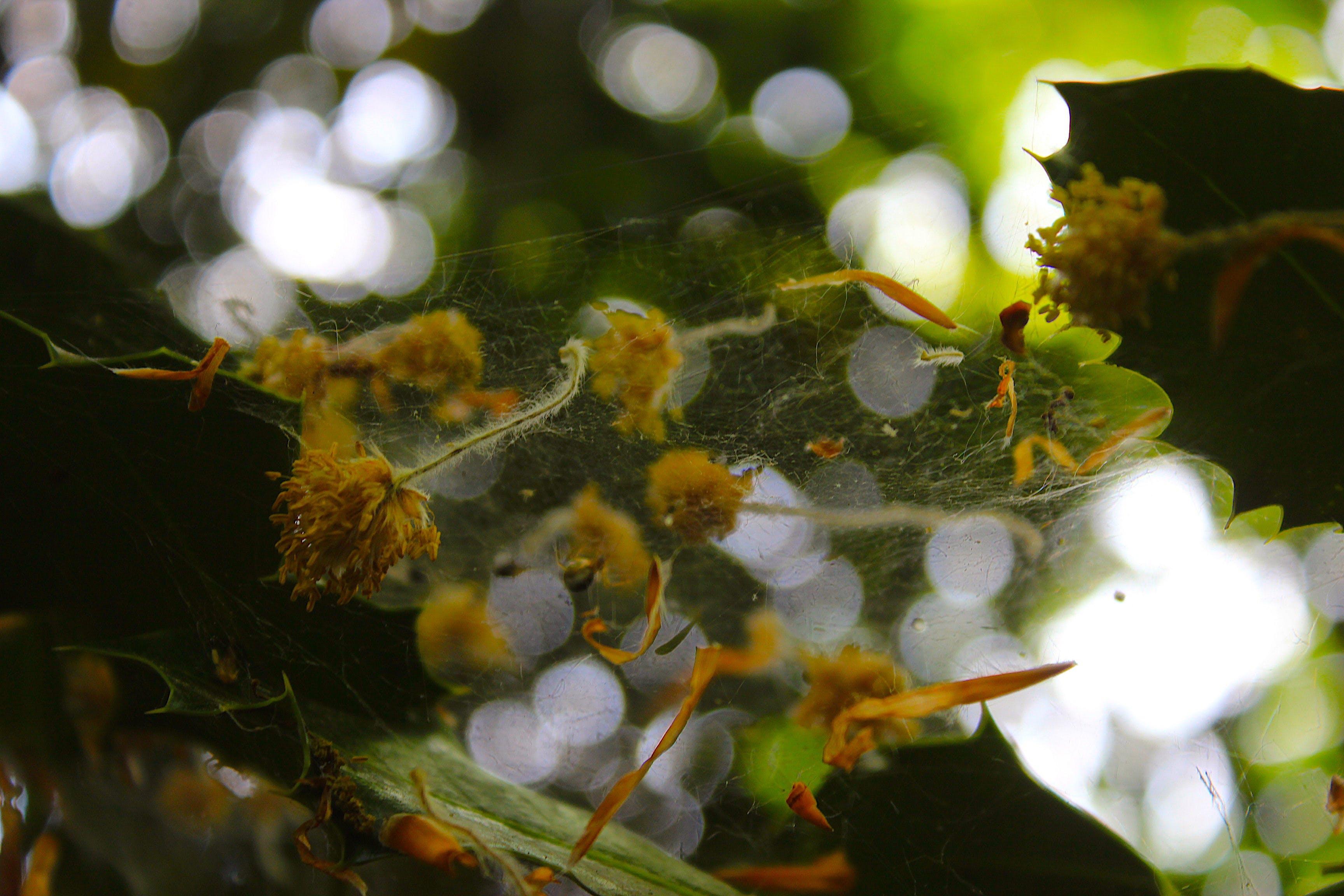 Flowers On Spiderweb