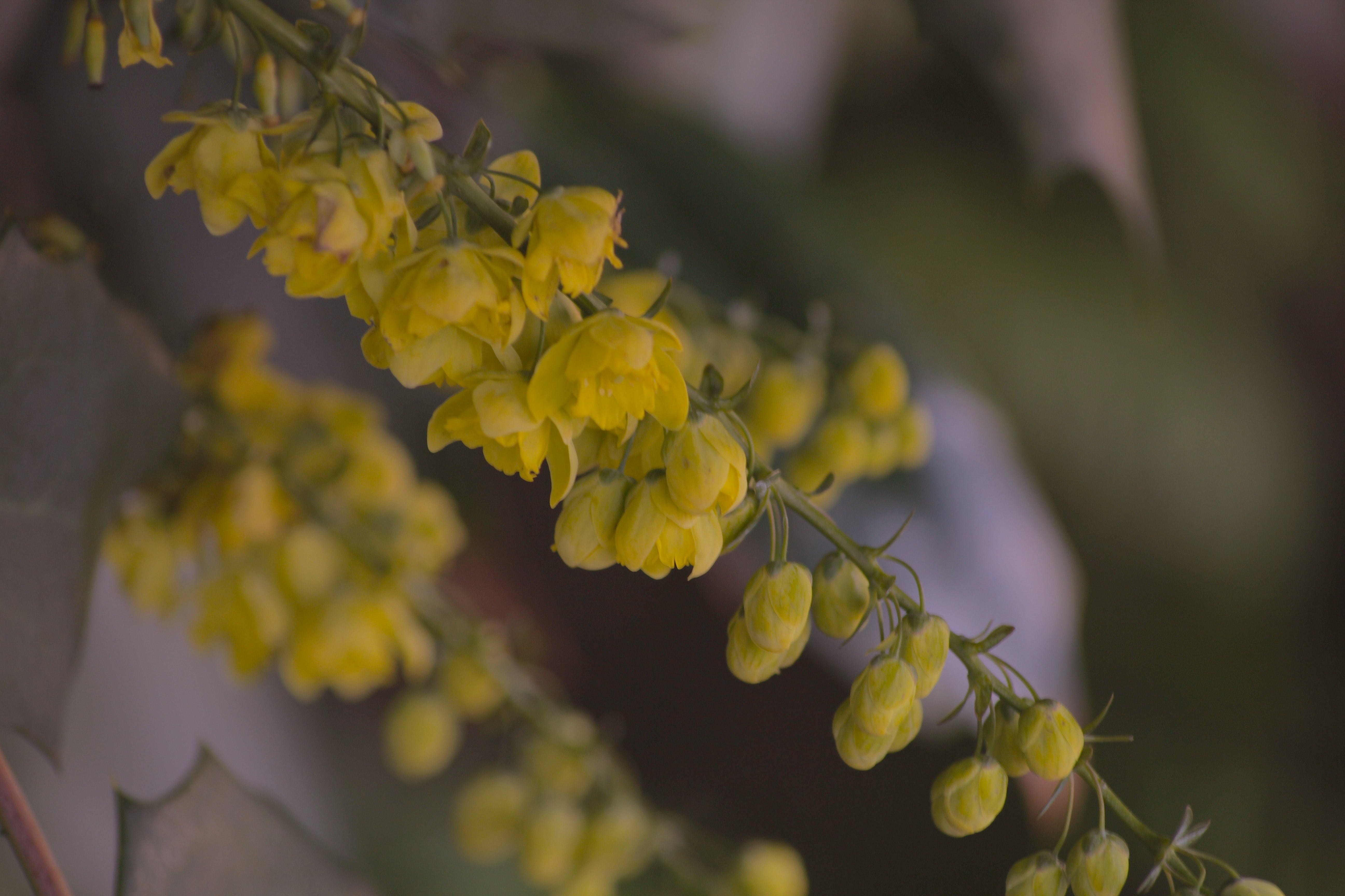 Free stock photo of nature photography, yellow flowers