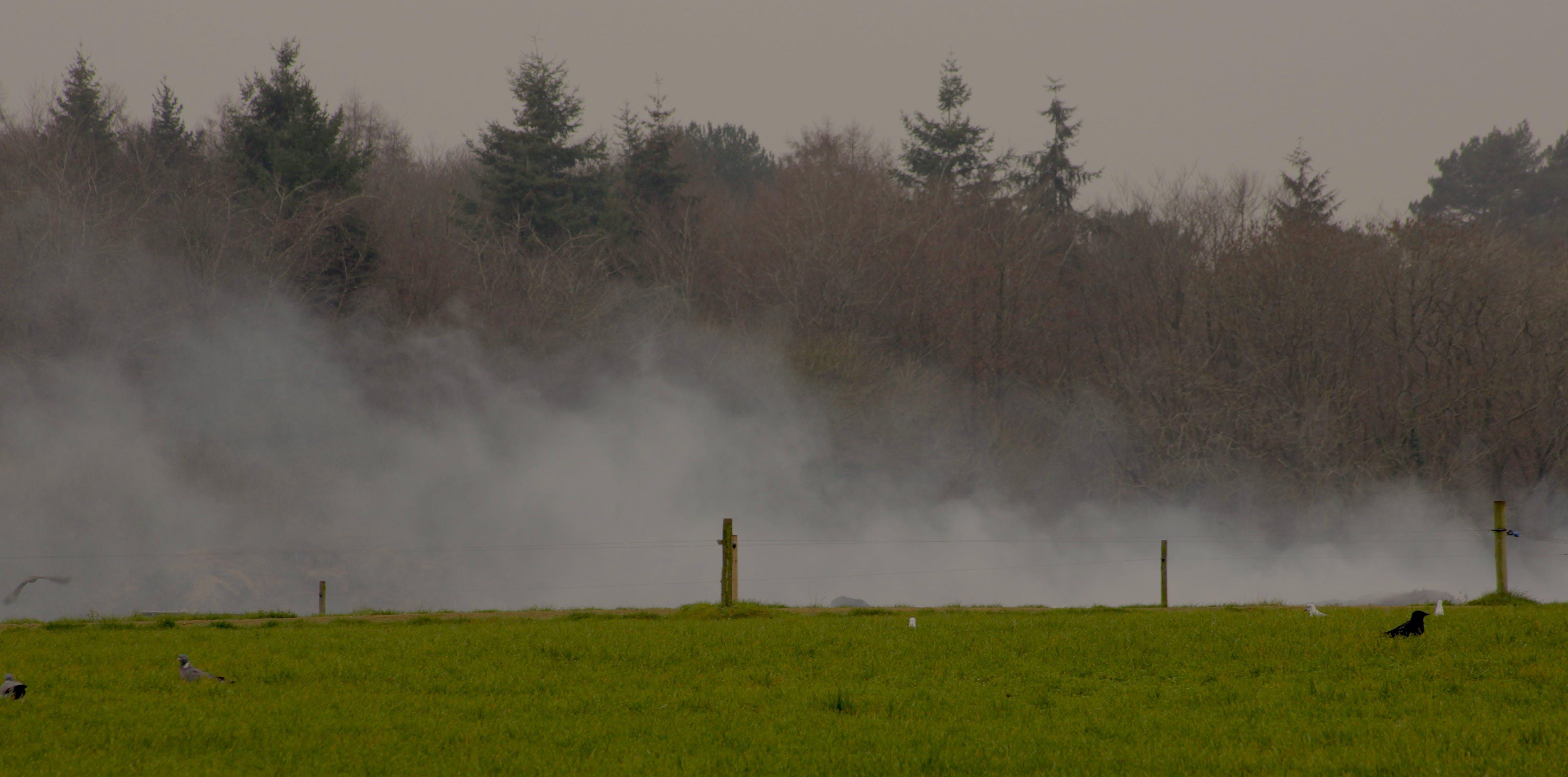Free stock photo of burning, field, nature photography, smoke