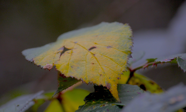 Free stock photo of autumn leaf, autumn leaves, nature photography