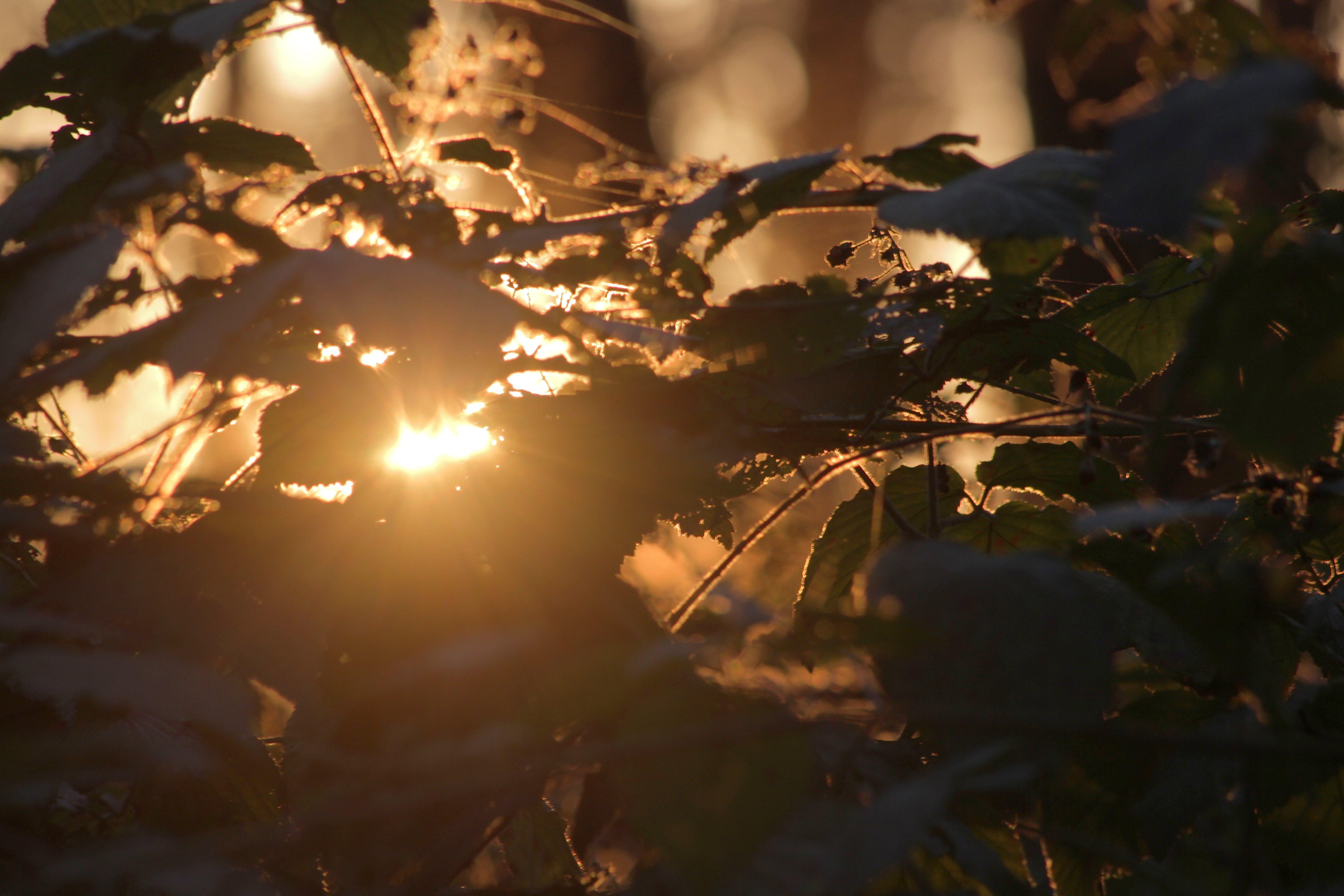 Free stock photo of golden sunset, nature photography, sunset