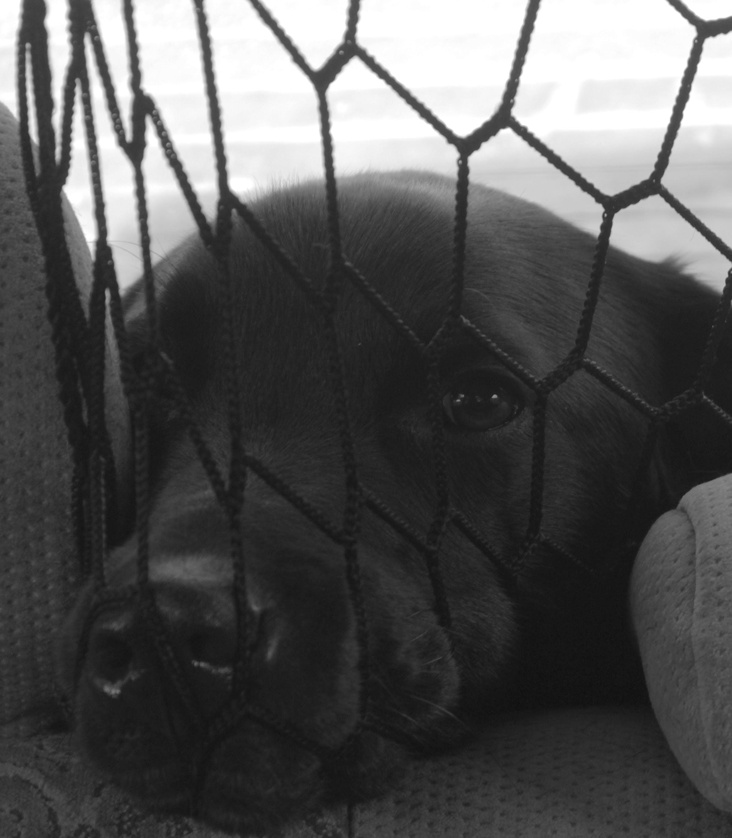 Free stock photo of #dog, dog, dog face, labrador