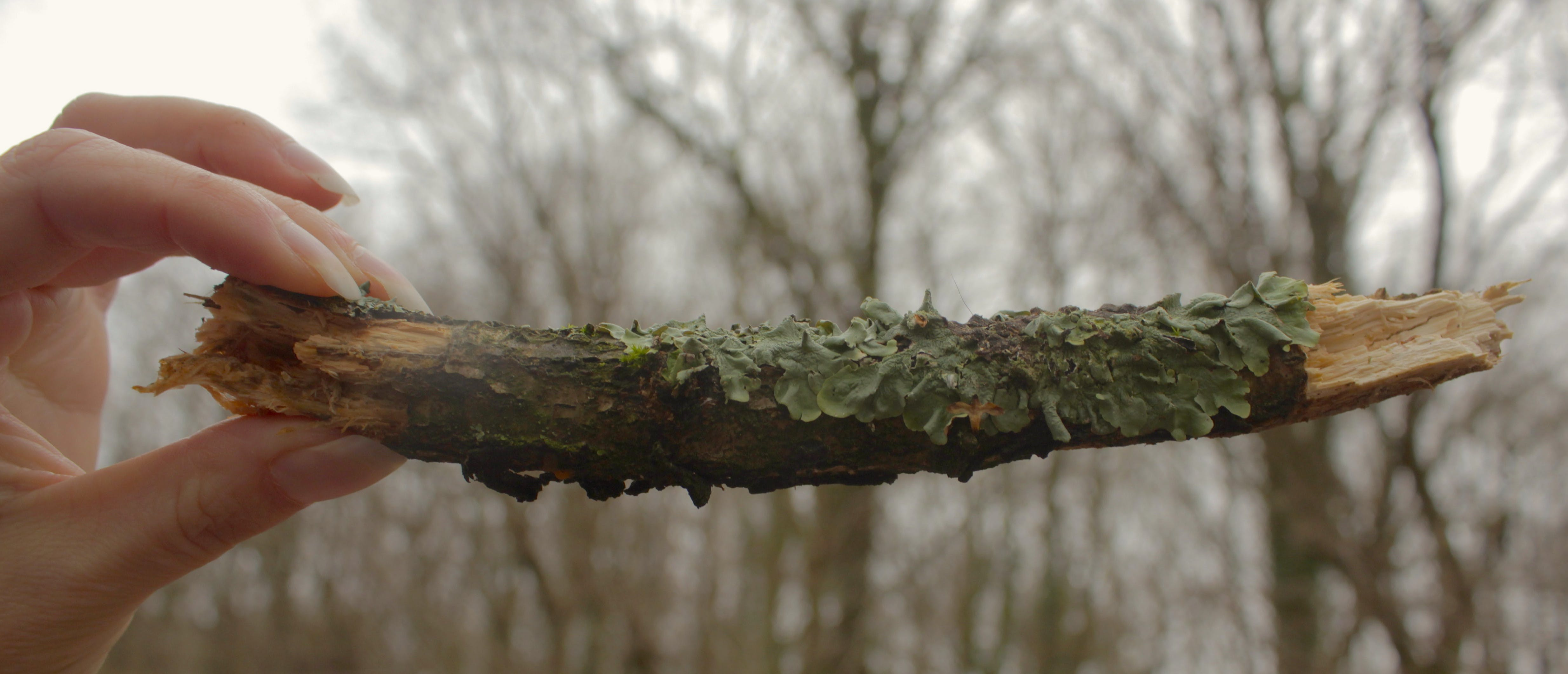 Free stock photo of nature photography, tree, twig