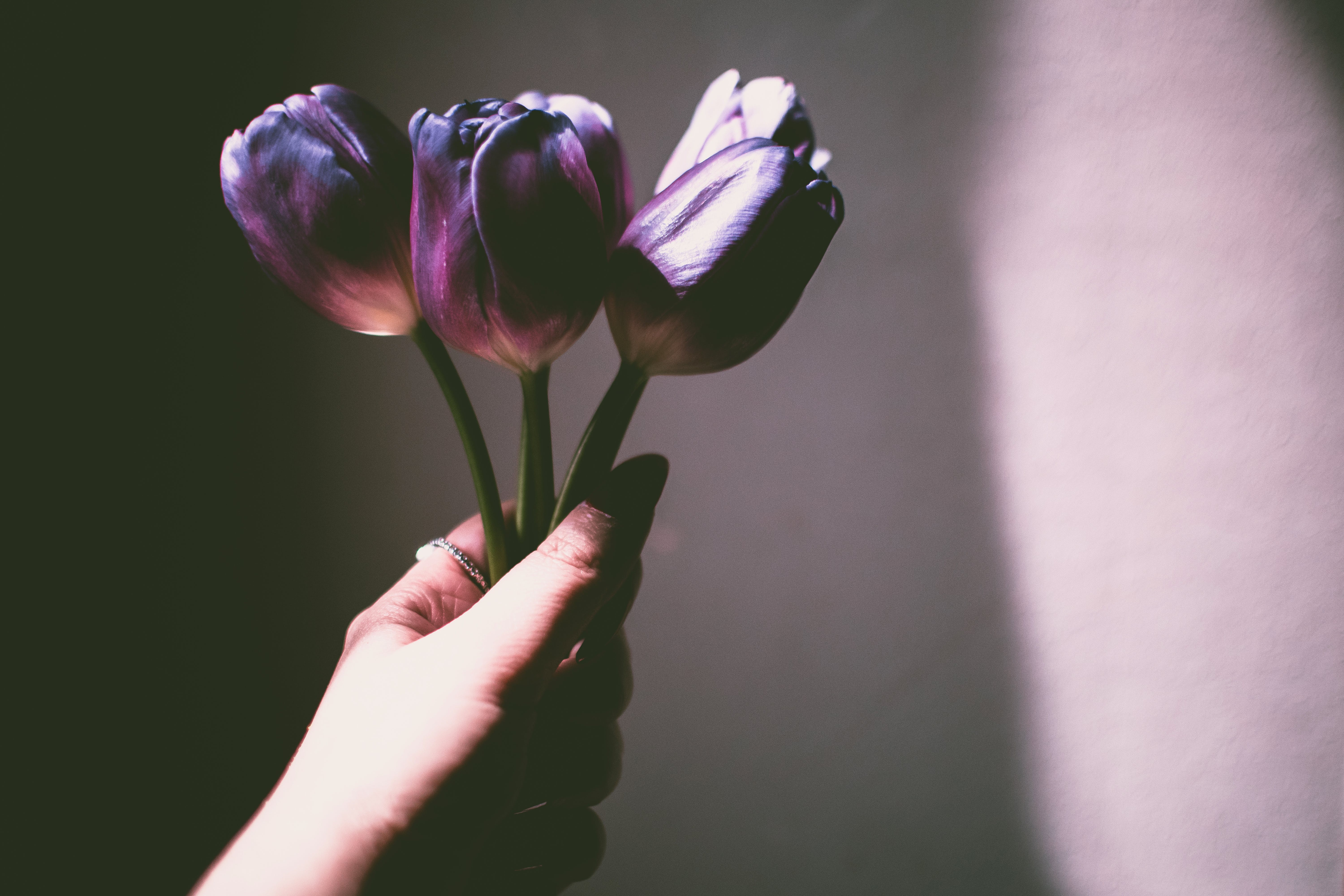 Person Holding Purple Petaled Flowers