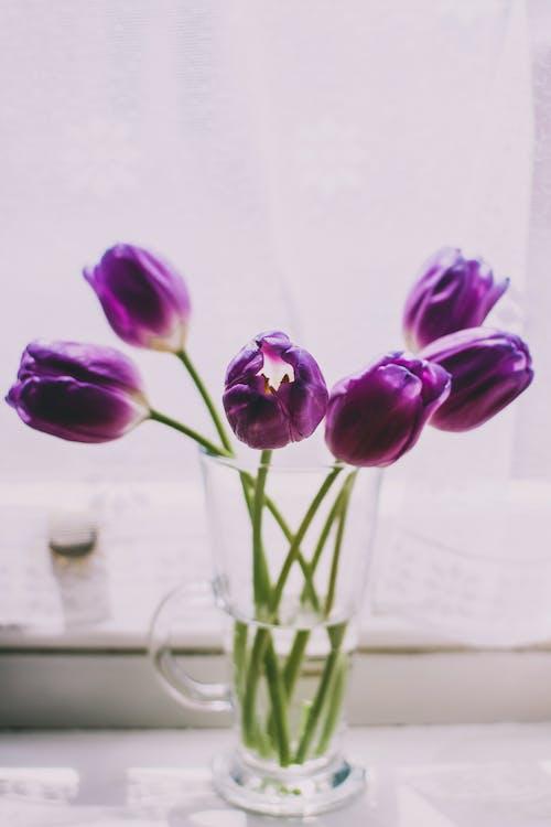 กลีบดอก, กลีบดอกไม้, ดอกทิวลิป