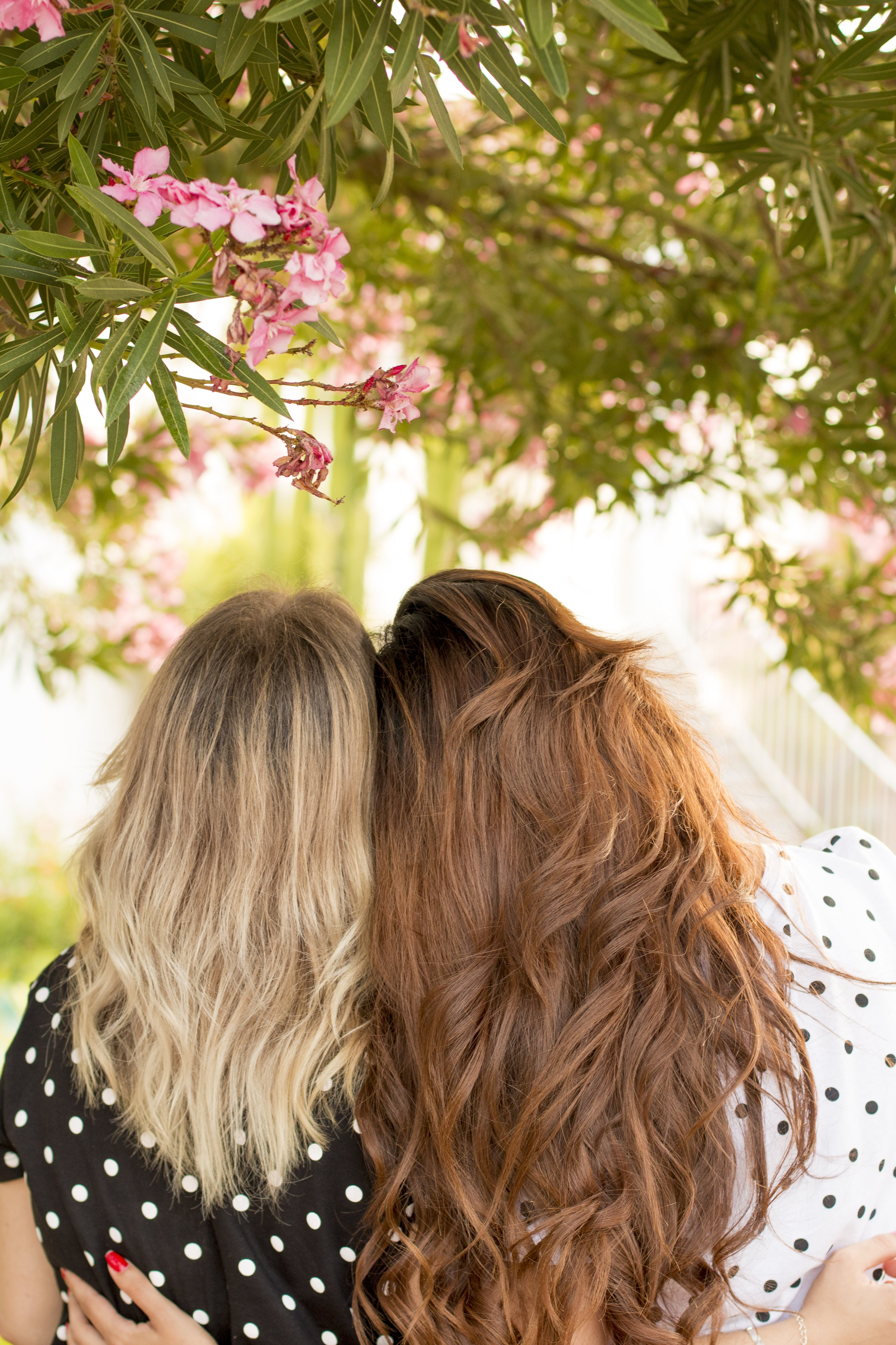 Two Women Leaning Side by Side Under Pink Petaled-flowering Plant