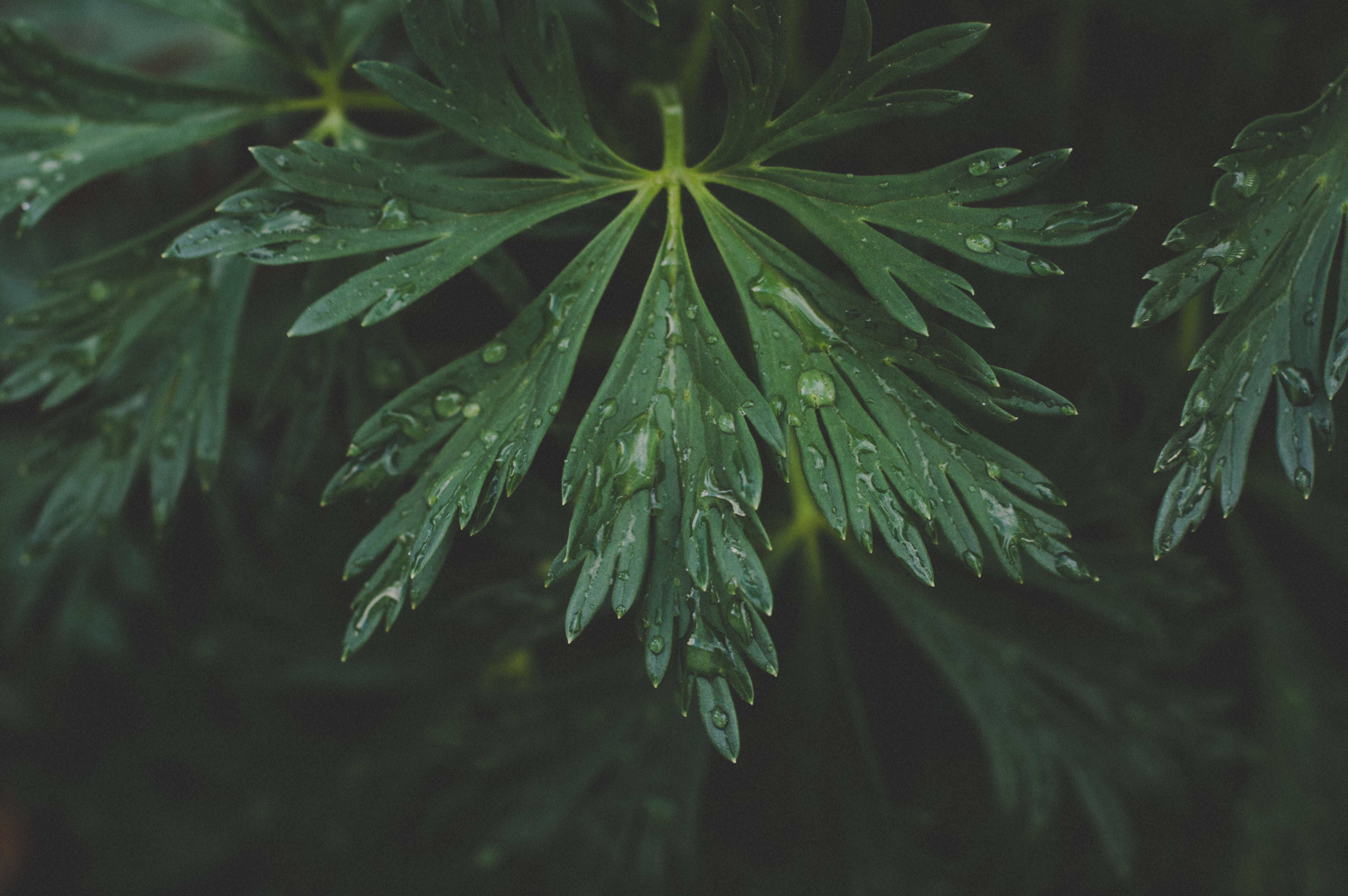 Photo Of Green Leaf With Drops Of Water