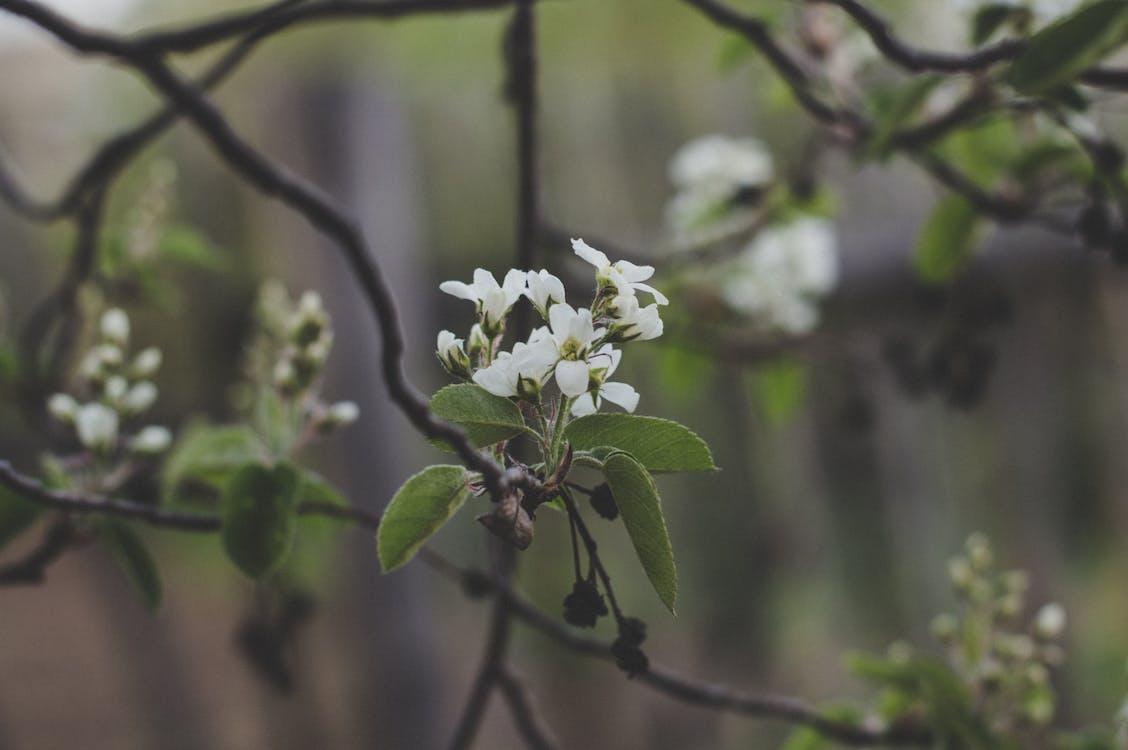anlegg, blomster, blomsterblad