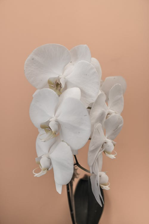 Foto profissional grátis de broto, flora, flores, orquídeas