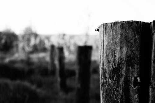 Free stock photo of art, black-and-white, nature