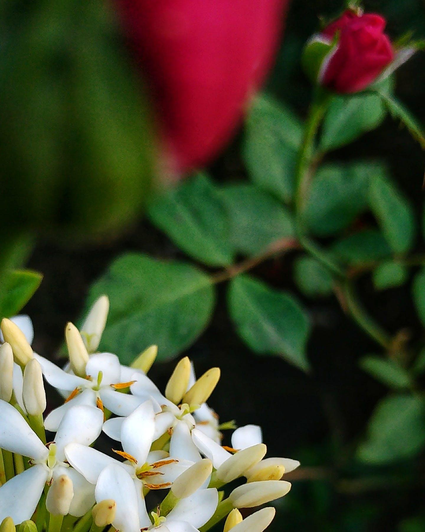 Free stock photo of blur, bokeh, flower, focus