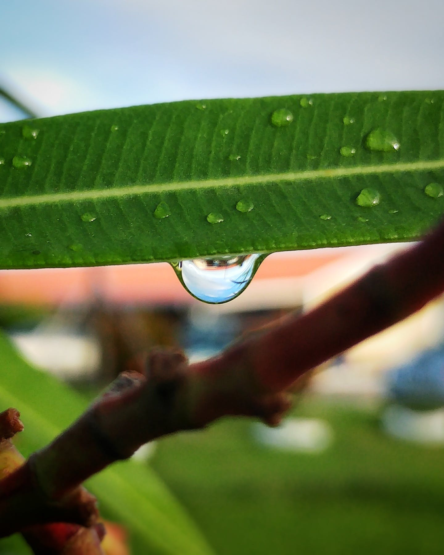 Free stock photo of leaf, nature, raindrop