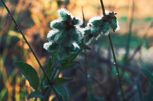 Free stock photo of cold, flower, frost, green