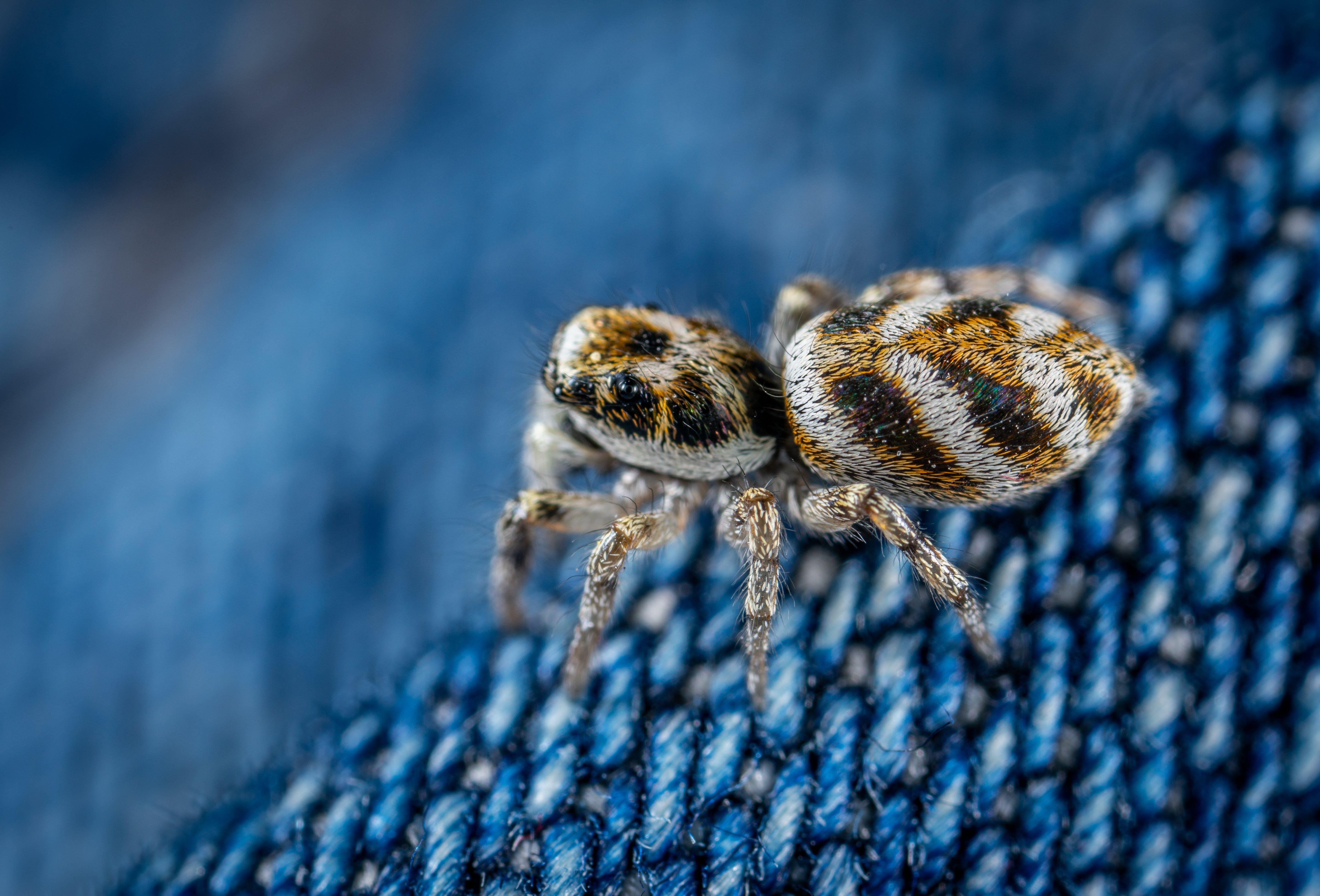 거미, 거미류, 동물, 매크로의 무료 스톡 사진