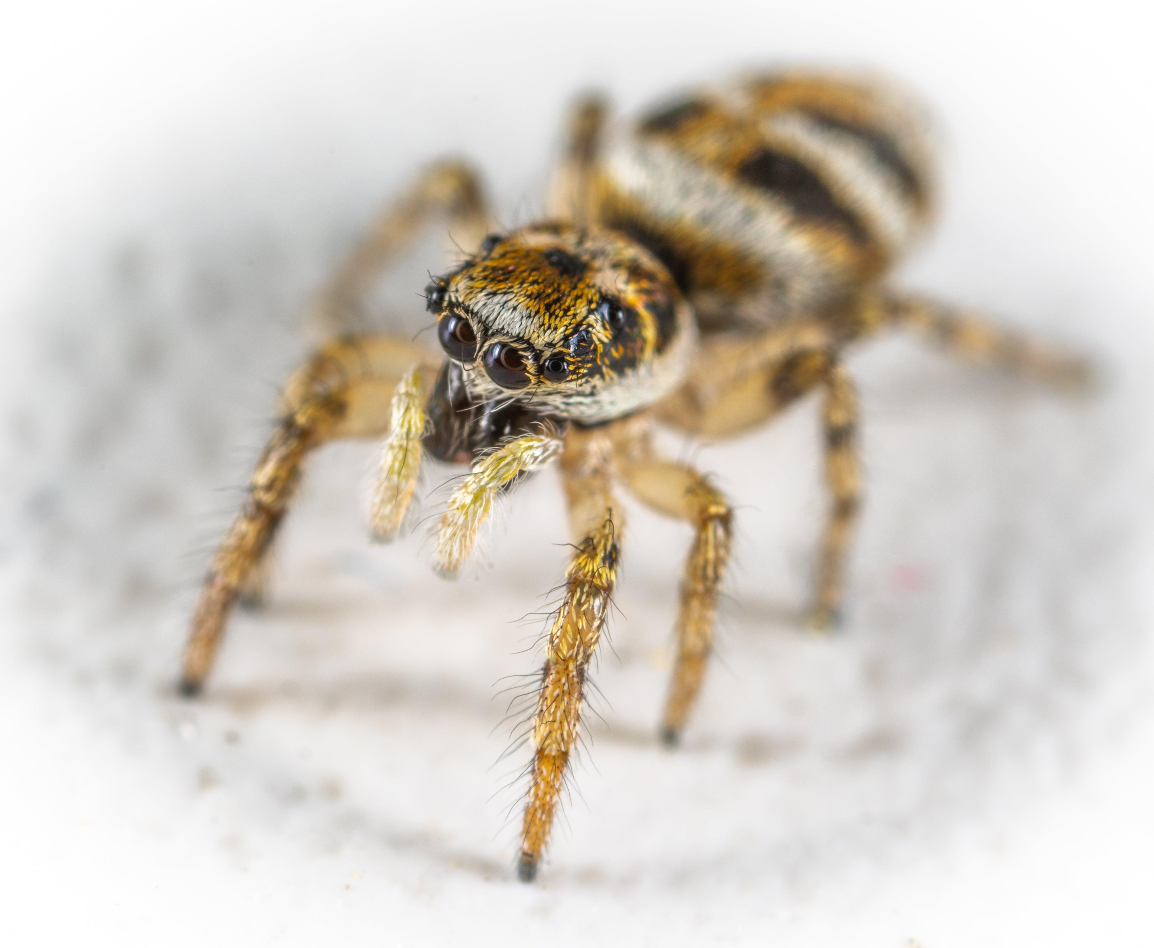 Close-Up Photo Spider