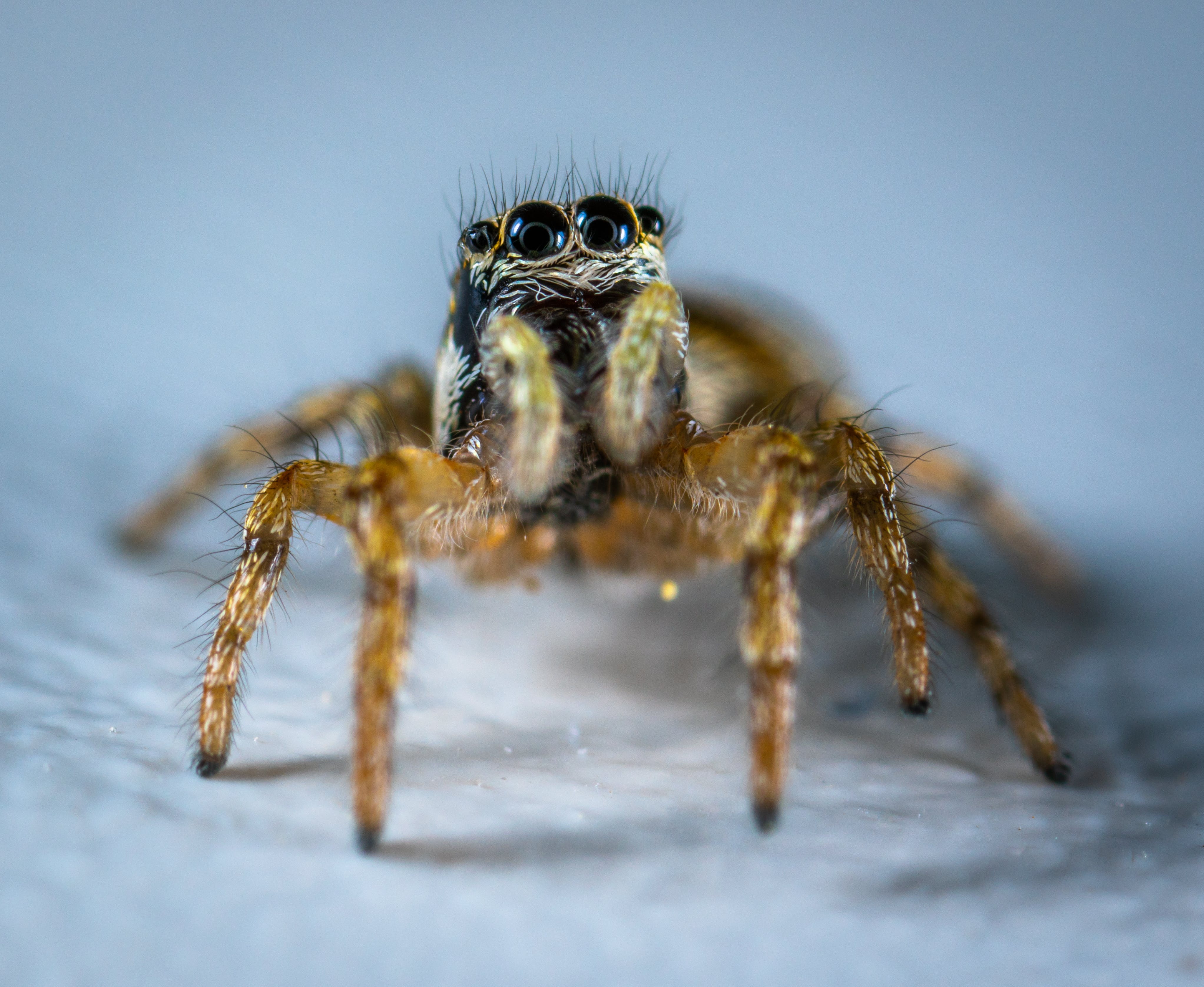 Spider Macro Photography