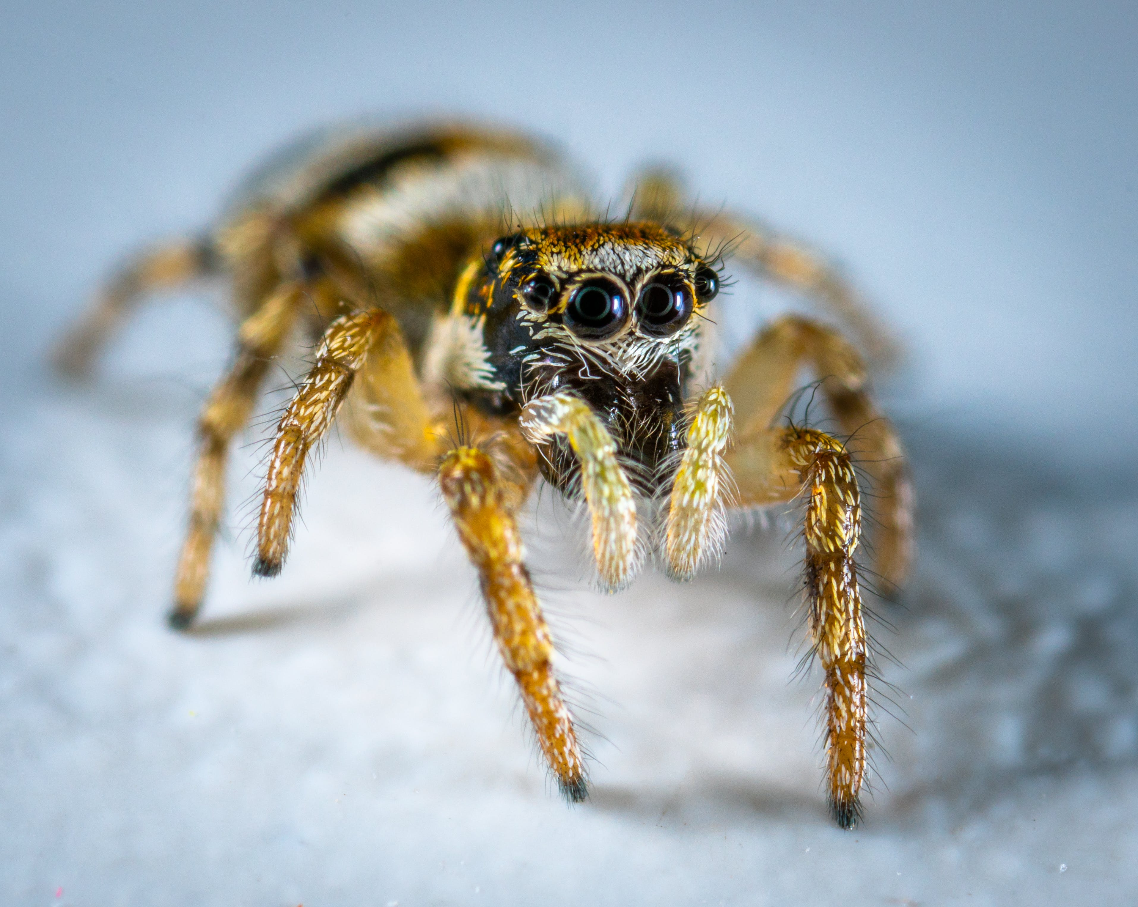 Selective Focus Photography Of Spider